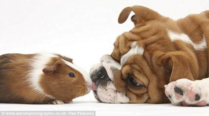 Cute Overload (10 pics)