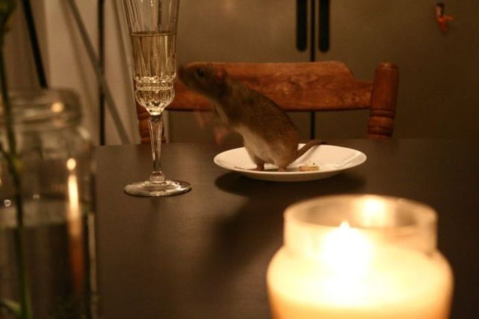 Unusual Valentine's Day Date (12 pics)