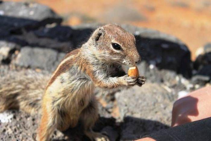 It's Feeding Time (9 pics)
