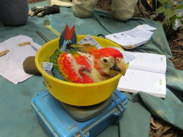 Little Parrot (4 pics)