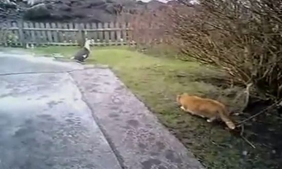 Cat Hunting Gone Wrong