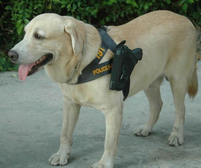 Police Dog in Thailand (3 pics)