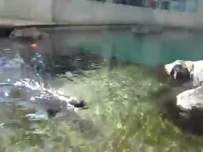 Loud Seal Scream