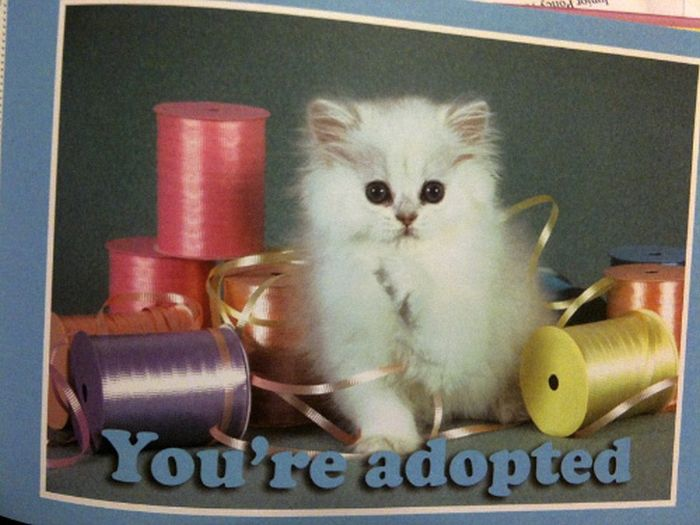 Breaking Bad News with Baby Animals (16 pics)