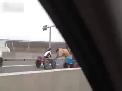 Horse Riders On The Highway