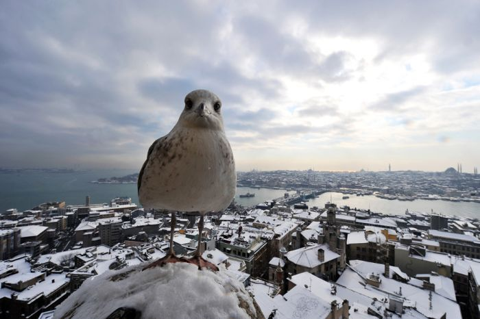 Winter Photos (47 pics)