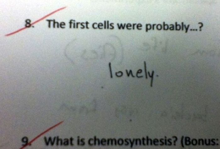 Funny Exam Answers. Part 7 (36 pics)
