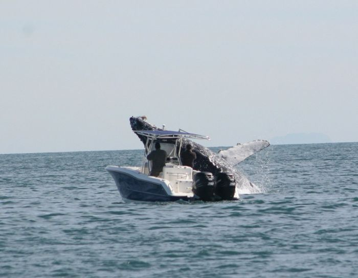 Whale Attacks a Boat in Mexico (7 pics)