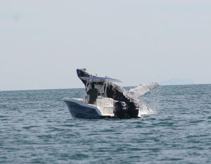 Whale Attacks a Boat in Mexico (7 pics)