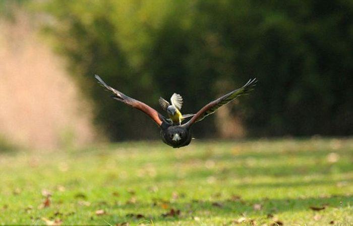 Brave Bird (4 pics)