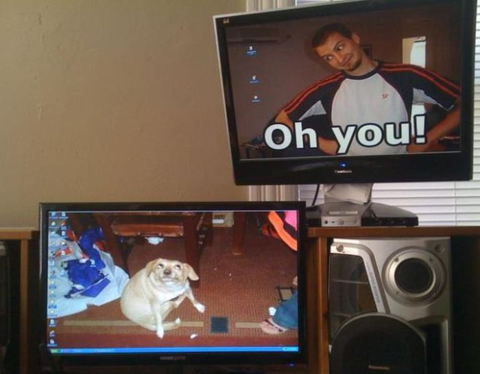 Funny Desktop Wallpapers (20 pics)