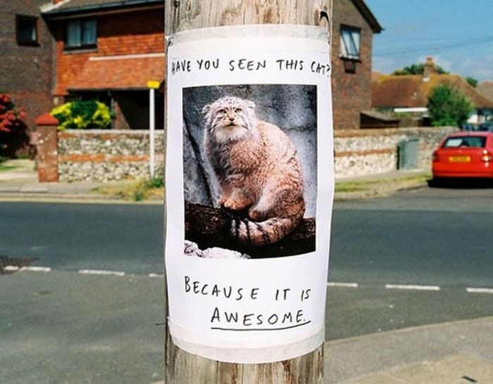 Lost Found Signs Pics - 20 hilarious lost pet signs