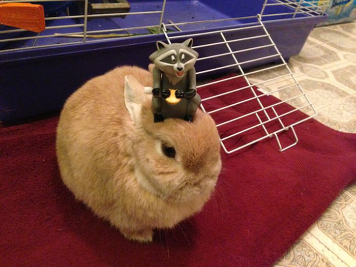 Stuff On My Rabbit (50 pics)