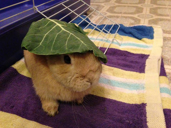 Stuff On My Rabbit (50 pics)