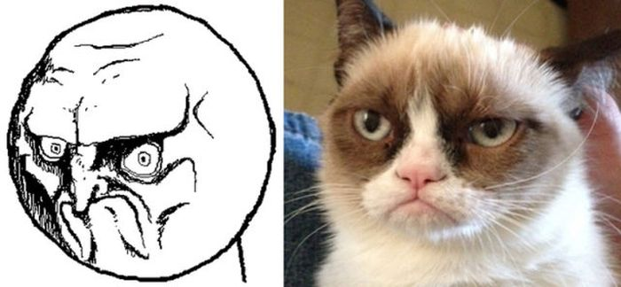 Cats As Rage Faces (18 pics)