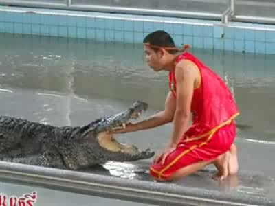 Amazing Crocodile Training Skills