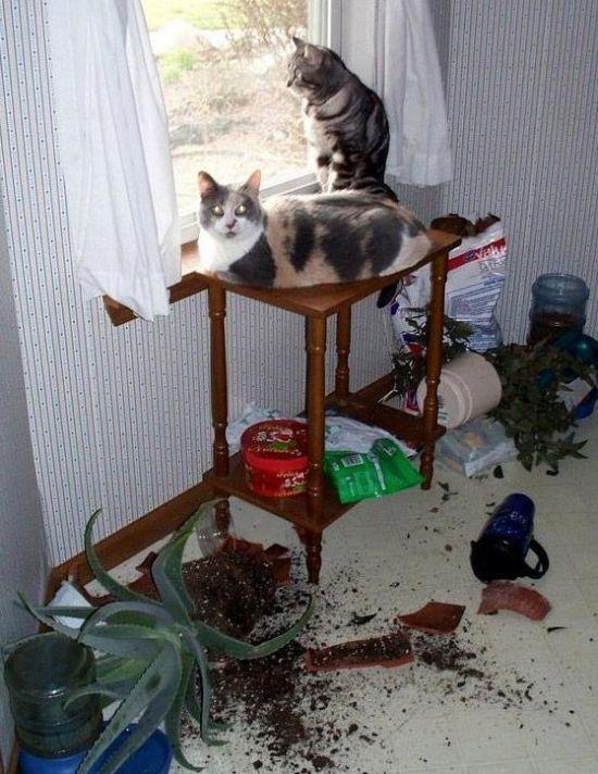 Animals Being Jerks (20 pics)