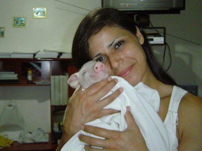 Pet Pig (9 pics)