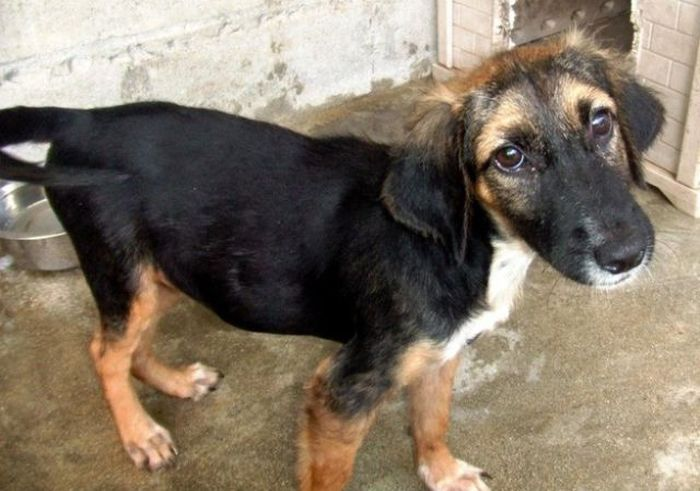 Rescued Shelter Dogs Before and After (16 pics)