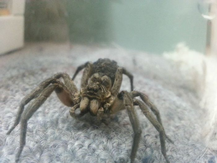 Scary Spider (10 pics)