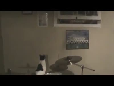 Cats Are Jerks Compilation