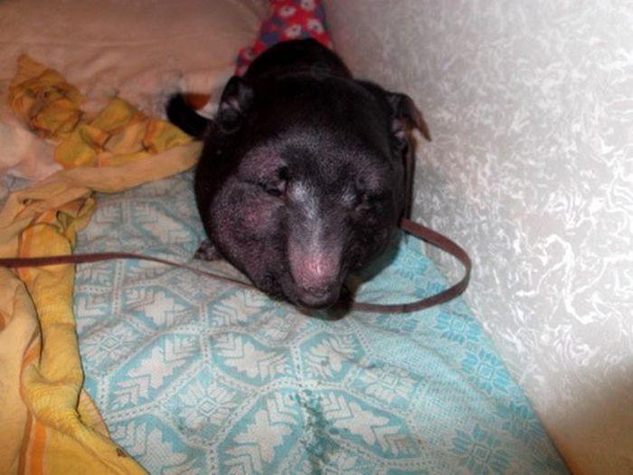 Dog Rescued (4 pics)