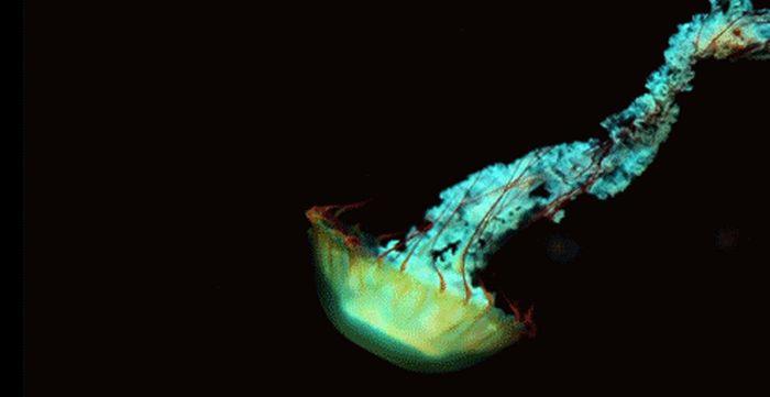 Sea Life GIFs (20 pics)
