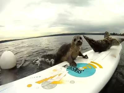 Cute Seals Having Fun