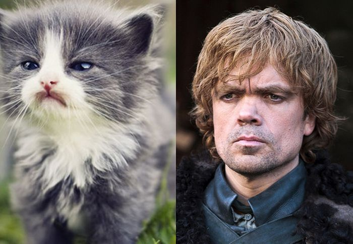 Game of Cats (18 pics)