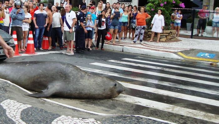 Sea Lion in the City (5 pics)