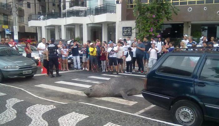 Sea Lion in the City (5 pics)
