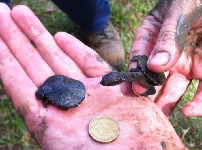 Turtle Rescue (11 pics)