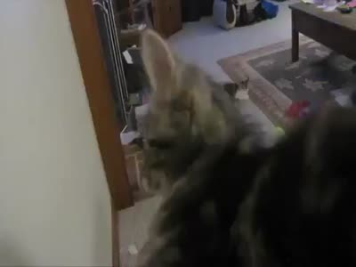 Strange Cat Forgets How to Meow