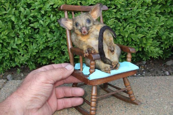 Taxidermy's Mad Scientist (33 pics)