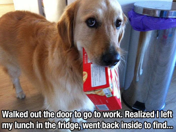 Dog Pictures (37 pics)