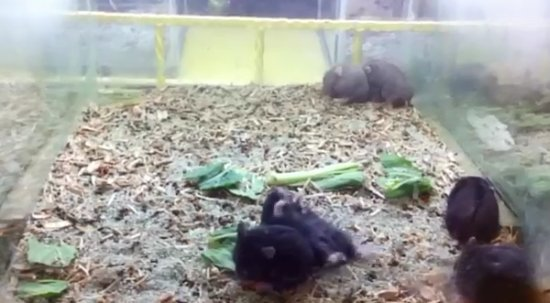 Funny Hamster Harlem Shake