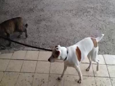 Cat Goes For a Walk With Puppy