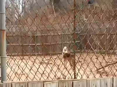 Wolfs Sanctuary Howling