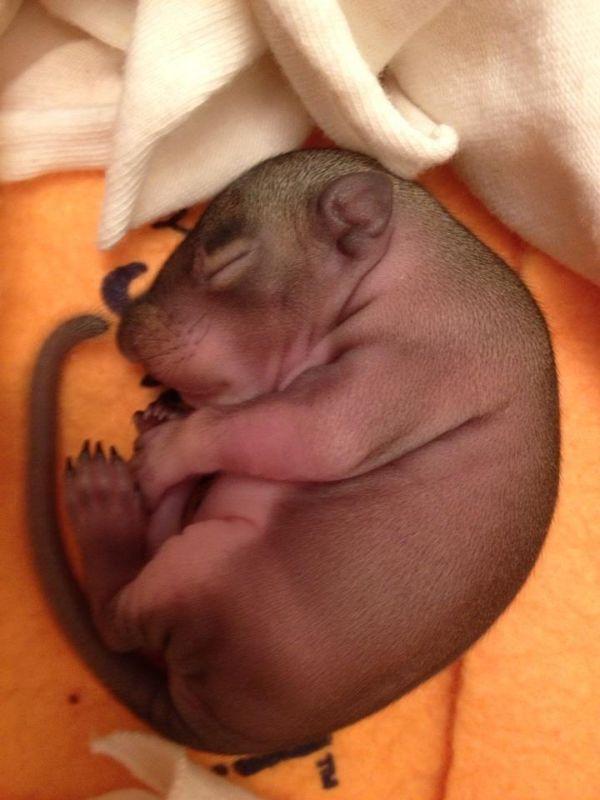 Baby Squirrel Zip Day 1 thru Week 5 (6 pics)