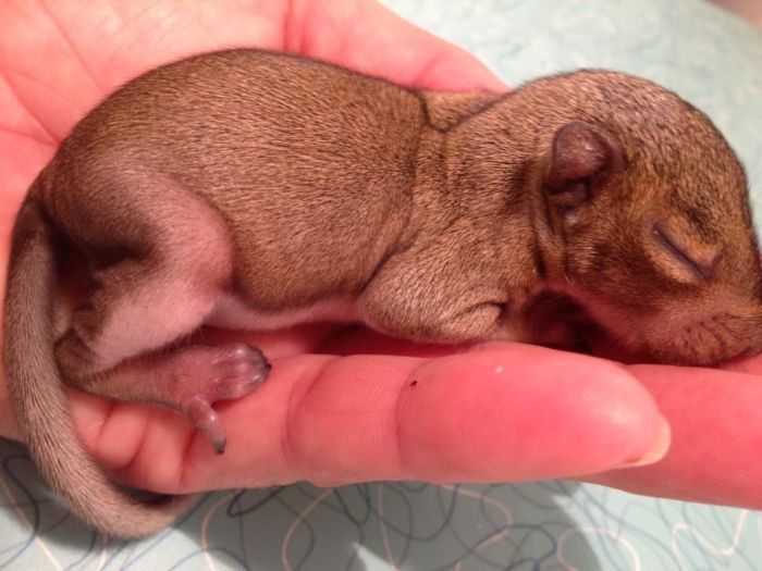 Baby Squirrel Zip Day 1 thru Week 5 (6 pics)