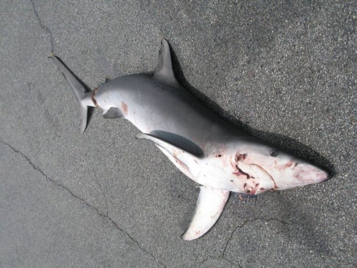 Shark Fell Down from the Sky (6 pics)
