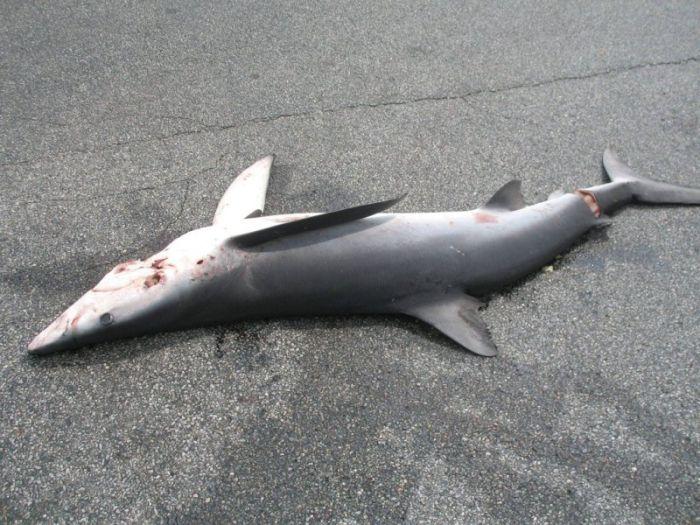 Shark Fell Down from the Sky (6 pics)