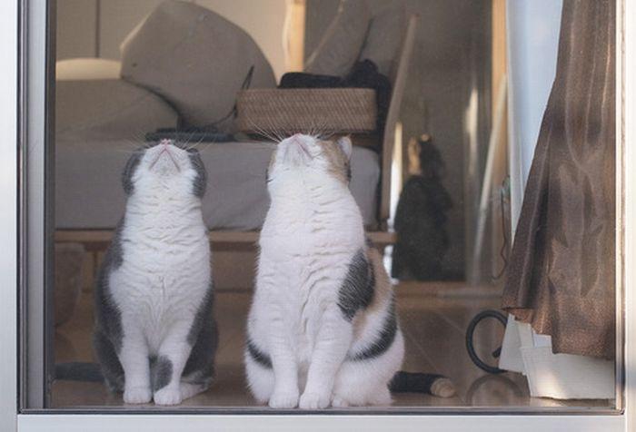 Funny Cats (5 pics)
