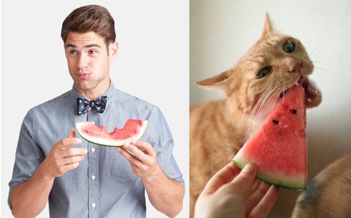 Hot Men And Their Feline Counterparts (67 pics)