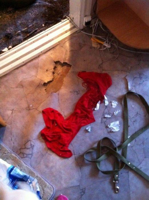 Puppies  Destroy Home (14 pics)