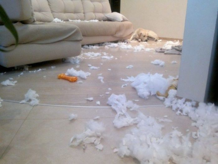 Puppies  Destroy Home (14 pics)