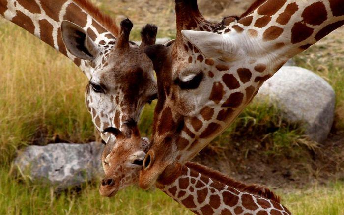 Animal Photos (39 pics)