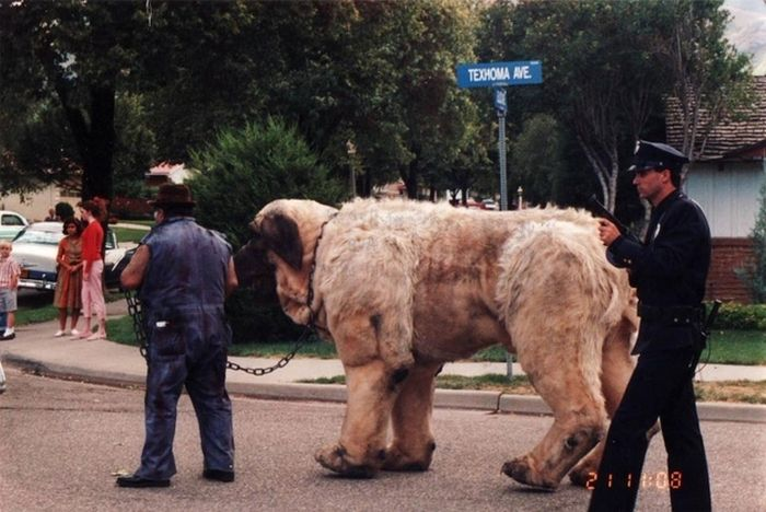 """The Beast from """"The Sandlot"""" (3 pics)"""