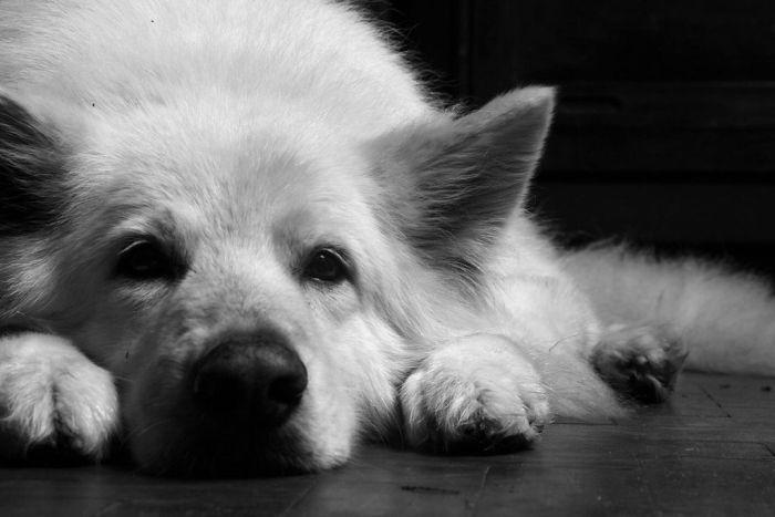 Best Friend (10 pics)