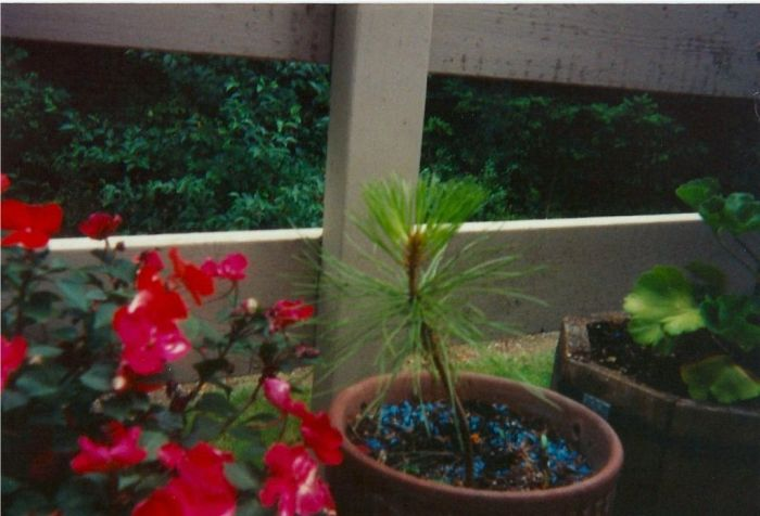 Arbor Day Tree (4 pics)